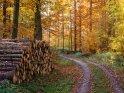 Dieses Motiv ist am 20.11.2019 neu in die Kategorie Herbstlandschaften aufgenommen worden.