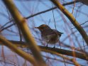 Dieses Motiv wurde am 22. März 2020 in die Kategorie Vögel eingefügt.