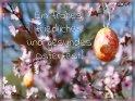 Ein frohes, friedliches und gesundes Osterfest!    Dieses Motiv ist am 08.04.2020 neu in die Kategorie Osterkarten für schwierigen Zeiten aufgenommen worden.
