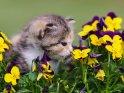 Dieses Motiv ist am 06.10.2020 neu in die Kategorie Katzen aufgenommen worden.