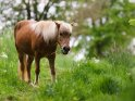 Dieses Motiv ist am 05.06.2020 neu in die Kategorie Pferde aufgenommen worden.