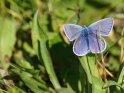 Dieses Kartenmotiv wurde am 28. Juni 2021 neu in die Kategorie Schmetterlinge aufgenommen.