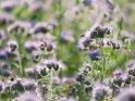 Dieses Motiv finden Sie seit dem 28. August 2021 in der Kategorie Weitere Blumen.