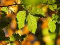 Dieses Motiv finden Sie seit dem 28. September 2020 in der Kategorie Herbstfotos.