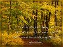 Herbstspaziergänge in der freien Natur kann man fast ohne Ansteckungsgefahr genießen.    Dieses Kartenmotiv ist seit dem 30. Oktober 2020 in der Kategorie Empfehlungen zur Gesundheit.