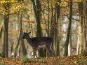 Dieses Motiv ist am 22.11.2020 neu in die Kategorie Tierische Herbstfotos aufgenommen worden.