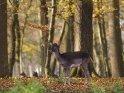 Dieses Motiv ist am 25.11.2020 neu in die Kategorie Tierische Herbstfotos aufgenommen worden.