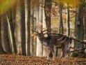 Dieses Motiv ist am 24.11.2020 neu in die Kategorie Tierische Herbstfotos aufgenommen worden.