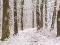 Dieses Kartenmotiv ist seit dem 25. Januar 2021 in der Kategorie Schnee.