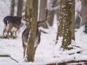 Dieses Motiv ist am 09.02.2021 neu in die Kategorie Tierische Winterfotos aufgenommen worden.