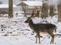 Dieses Motiv ist am 16.02.2021 neu in die Kategorie Tierische Winterfotos aufgenommen worden.