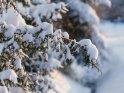 Dieses Motiv ist am 16.02.2021 neu in die Kategorie Schnee aufgenommen worden.