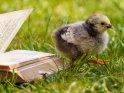 Dieses Motiv findet sich seit dem 30. August 2021 in der Kategorie Enten, Gänse & Hühner.