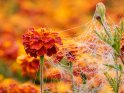 Dieses Motiv ist am 09.09.2021 neu in die Kategorie Spinnennetze aufgenommen worden.
