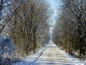 Verschneite Sraße in Mitten von weißen Bäumen