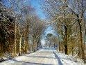Verschneite Straße, eingerahmt von Bäumen