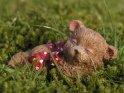 Schlafende Bärenfigur