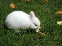 Kaninchen mit Möhre und Salatblatt