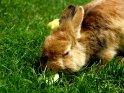 Kaninchen mit Obst