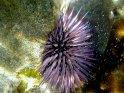 Foto von einem Seeigel