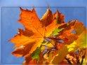 Einen schönen 22. Oktober