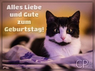 Katze geburtstagssprüche Geburtstagssprüche für